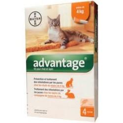 BAYER ADVANTAGE - krople przeciwpchelne dla kotów o masie ciała do 4kg. Roztwór do nakrapiania.
